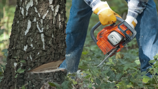 Tree Cutting in Kalamazoo