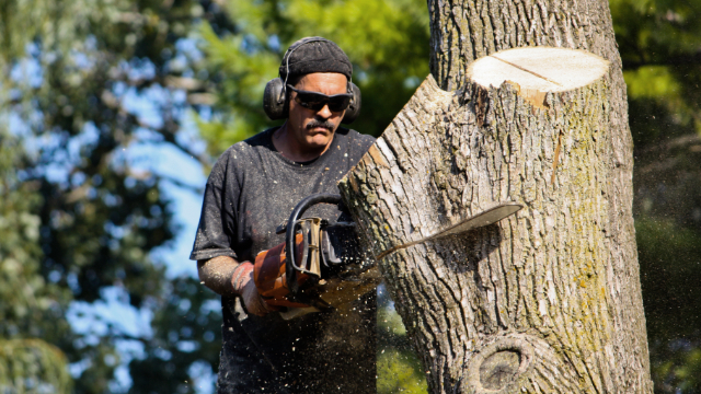 Tree Removal Company in Kalamazoo