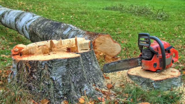 Tree Cutting Customer Testimonial