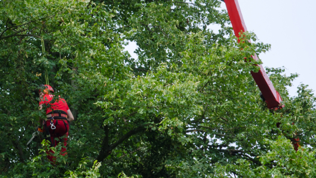 Tree Pruning Company in Kalamazoo, MI