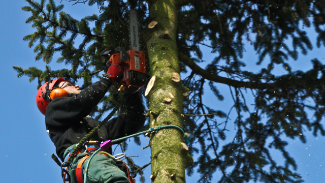 Tree Pruning in Kalamazoo, MI