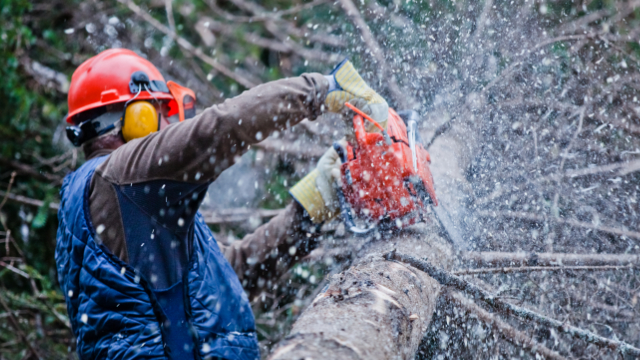 Tree Service In Kalamazoo