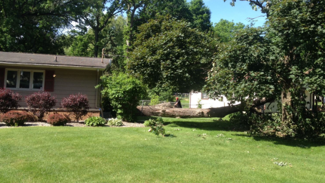Tree Removal In Three Rivers, MI